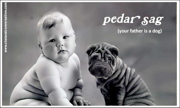 pedar sag, father dog