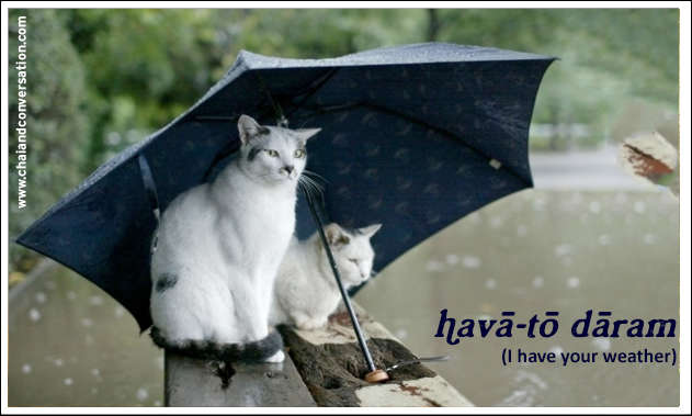 hava to daram, i have your weather, two cats under umbrella