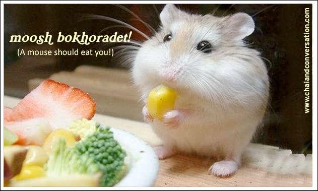 moosh bokhoradet, a mouse should eat you
